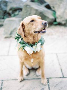 Gemma & Mark's Intimate Wedding- Church Detail - Margot the Labrador - Styling & Planning - Lily & Sage | Photography - Katie Julia | Flowers - Westwood Design