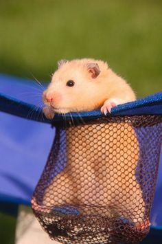 Hamsters are so cute and make wonderful pets.