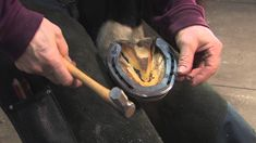 FootPro Farrier Information Series: Shoeing the Hind Feet