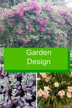 1000 images about gardens flowers and flora on pinterest for 1000 designs for the garden and where to find them