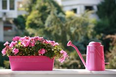 Most of the problems balcony gardeners faces are universal, so we've piled up 5 really basic and common problems with their answers with a hope that these balcony gardening tips and answers will surely help you in creating a wonderful balcony garden.