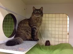 This boy is Theo, who found his purr-fect home!