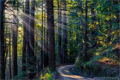 https://www.facebook.com/371422548082/photos/a.371438633082.197753.371422548082/10153424039783083/?type=1  -  Don Smith Photography  - God Beams Through Redwoods, Old Coast Road, Big Sur Coast, California