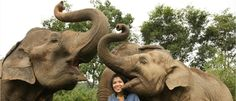 Elephant Nature Park, Chiang Mai, rescue and rehabilitation center - not like the abusive tourist traps in Thailand...