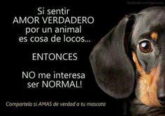 Amor animales