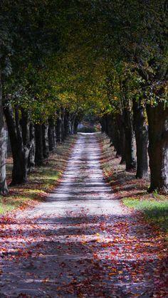 Autumn, lone road, trees, garden, 720x1280 wallpaper