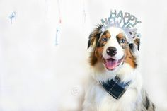 CONTEST TIME 2016 marks the beginning of a new year & we are celebrating with a huge contest full of amazing prizes (GoPro anyone?!) To participate you must:  1. Follow all hosts & prize hosts  @lokithegoldengod @elvis_gsdexplorer @lizzie.bear  @miniaussie_bryn @allie.gator.aussies @sashas.shenanigans @kyra.bc @oli_the_aussie_ @crazyaboutspots @lucky.aussie @gsd_luna @pawsthatwander @kelly_bove  2. Post a creative New Years photo of your dog. It can be a 2016 photo New Years resolution or…