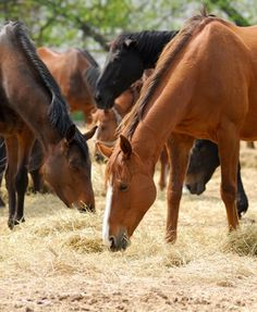 Horses and Tight Budgets - TheHorse.com   Here are a few ways to spend less on horsekeeping. #horses #horseownership