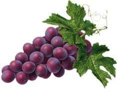 Gallery - Recent updates Watercolor Fruit, Fruit Painting, Herbs Image, Grape Kitchen Decor, Fruit Coloring Pages, Medical Wallpaper, Food Texture, Wine Logo, Food Clipart