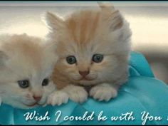 Wish I could be with you love cute miss you love quote friend kitten kitty cute animals greeting animal quotes miss you quote miss you comment Cute Miss You, I Love You Baby, We Fall In Love, Cute Cats And Dogs, Animals And Pets, Cats And Kittens, Cute Animals, Good Morning Flowers Rose, Good Morning Funny Pictures