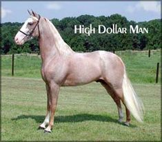 A strawberry roan Tennessee Walking Horse Stallion.  Looks just like my childhood horse! But a mare!