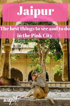 Jaipur Travel | Discover what to do and where to stay in the Pink City in India. #India #IndiaTravel #JaipurTravel