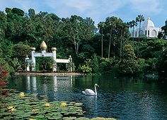 Lake Shrine Temple and Lake: Lake Shrine is a hidden gem I visit when I want to escape city life and rush hour traffic. Located in Pacific Palisades, just off Sunset and PCH, Lake Shrine is a great place to retreat. Take a walk through the Meditation Gardens and enjoy the tranquil elements of the swan pond. #LakeShrine #Meditation #LosAngeles