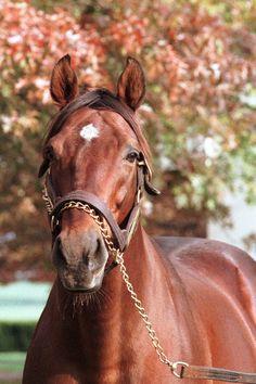 Alysheba  1987 Kentucky Derby winner
