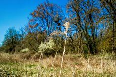 Magány...Long-erdő természetvédelmi terület,Sárospatak környékén...