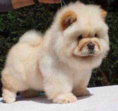 Ok all puppies are cute. But these are by far the cutest!