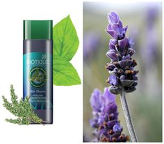 Lavender oil is an aromatic essential oil which has soothing properties and helps heal dry or chapped skin. It also helps maintain the health of the hair, prevent hair loss and keep tresses strong and soft. Use Bio Thyme conditioner which has #lavender oil as one of the main ingredients and helps thicken hair follicles and adds a healthy shine.