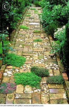 Wonderful mix of material for garden path.  Cobblestone sectioned between random pattern of bricks (reclaimed bricks offer a softer mellow tone of age along with irregular edges) and plantings of different types of thyme. Bordered with bricks as well. -- Front/Side of New shed?