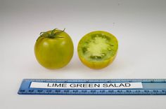 Lime Green Salad tomato, grown at Rutgers NJAES research farms.