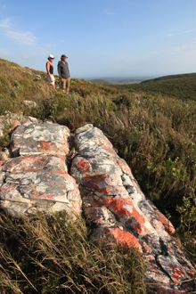 A wonderful new hiking experience through the Walker Bay Conservancy is magnificent at any time of year, but the fynbos is particularly fine in spring Provinces Of South Africa, Bloom Where You Are Planted, Seaside Village, Holiday Resort, Plant Species, Whale Watching, Heaven On Earth, Outdoor Life, Country Life