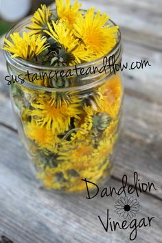A recipe for dandelion vinegar and dandelion salad. Also includes helpful info on uses of dandelion as a medicine and a food source. Edible Plants, Edible Flowers, Dandelion Salad, Dandelion Oil, Dandelion Leaves, Herbal Remedies, Natural Remedies, Dandelion Recipes, Flavored Oils