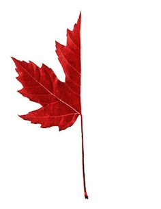 fall, draw the rest of the leaf