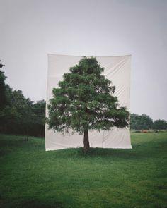 Myoung Ho Lee - l'artiste de la simplicité - Cahier de Seoul