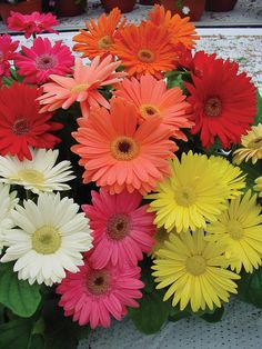 I love Gerbera Daisies ~ so many bright and cheerful colors