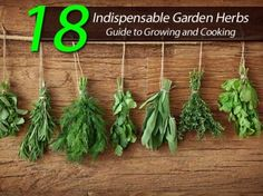 18 Indispensable Garden Herbs