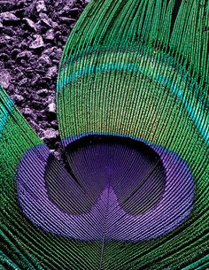 582 Best Peacocks Amp Feathers Images In 2015 Peacock
