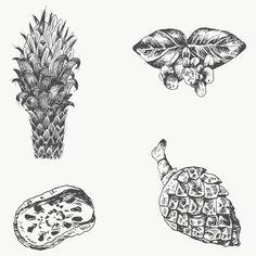 Plant Illustration, Flower Illustrations, Branch Vector, Christmas Plants, Drawing Wallpaper, Plant Vector, Free Hand Drawing, Hand Drawn Flowers, Leaves Vector