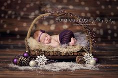 Caralee Case Photography, Newborn Photographer. Purple. Merry Christmas baby