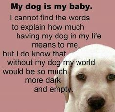 Without my dogs I wouldn't have anything at all. I'd be alone and have no reason to wake up every morning.