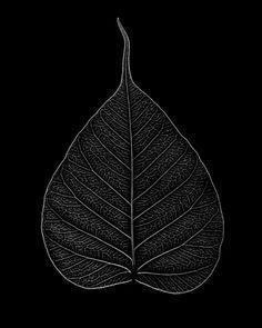 mianoti: Brian English Bodhi Leaf, Buddha, Dharma Hand For Jeff
