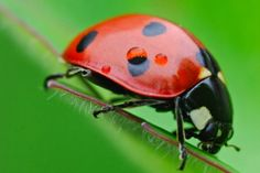 Helpful Insects for Your Garden