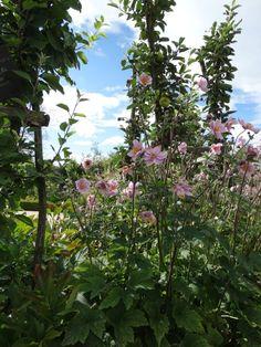 Fleurs du jardin potager du Château de la Bussière