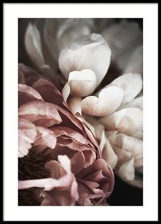Here you will find floral prints and posters. Stylish posters with botanical prints of colorful plants. Buy botanical posters online from Desenio. Home Poster, Poster Wall, Poster Prints, Art Posters, Modern Art Prints, Wall Art Prints, Groups Poster, Country Wall Art, Colorful Plants