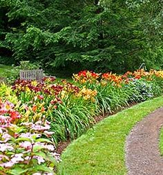 I'm thinking daylilies to go at the base of the tree and climbing roses.