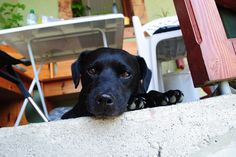 ares:) patterdale terrier