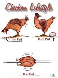 witzige Comic Gästebuch Bilder - chicken_lifestyle.jpg - GB Pics