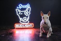 Spuds | Flickr - Photo Sharing!