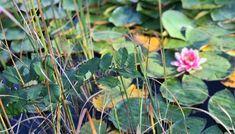 Will Smith, Html, Plants, Blog, Pursuit Of Happiness, Joie De Vivre, Blogging, Plant, Planets