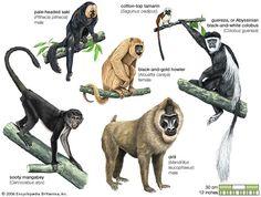Resultado de imagen para primates