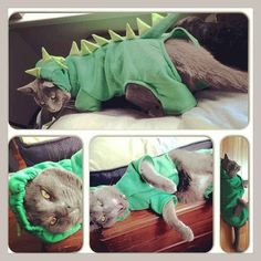 This dinosaur who is plotting your death. | 20 Cats Who Deeply Resent Their Halloween Costumes