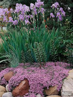 Terrific Absolutely Free Rock Garden plants Strategies Essentially, a rock garden—sometimes termed as _rockery_—is undoubtedly an intentional landscape Rock Garden Plants, Moss Garden, Rock Wall Gardens, Garden Planters, Beautiful Flowers Garden, Beautiful Gardens, Red Creeping Thyme, Replant, Cool Plants