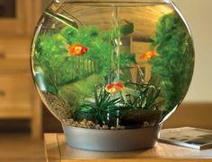 L\' aquarium mural en 41 images inspirantes! | Aquariums