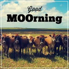 Today's a great day to get MOOvin'. :D | Daffodils Boutique - Prestonsburg, KY