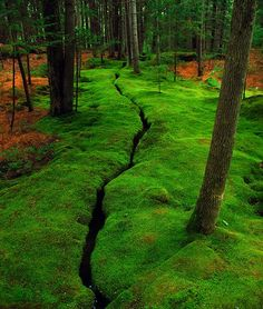 """Mossy Creek, Desert Island, Maine... This reminds me of my """"enchanted forest & creek"""" play spot near my home in Frederick, MD when I was a child. I was convinced there were fairies there.  with <3 from JDzigner www.jdzigner.com"""