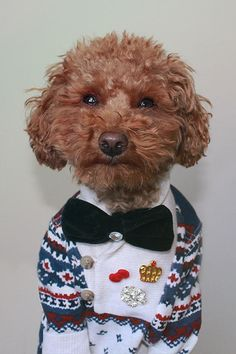 OMG! How can I get Petrie to wear something like this and sit for a photo???