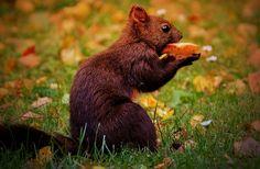 Squirrel, Nager, Cute, Nature, Rodent, Climb, Garden